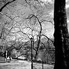 ~Walking the Dog in Central Park~ by a~m .