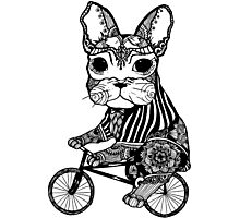Funny Big Mouse Rat on a Bicycle  Photographic Print