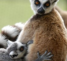 Lemur Love by ApeArt