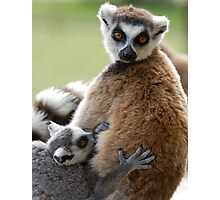Lemur Love Photographic Print