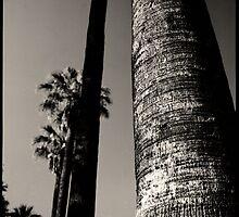 palms • woodland, ca • 2009 by lemsgarage