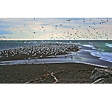 Gull Point Photographic Print