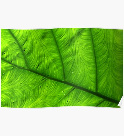 Veins of Green Poster