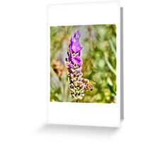 Pollinated Greeting Card