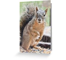 Squirrel Wink Greeting Card