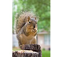 Squirrel Tongue Photographic Print
