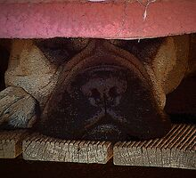 Our Nala's nose! by Ray Woledge