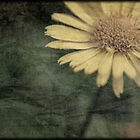 To a Dandelion by makbet666