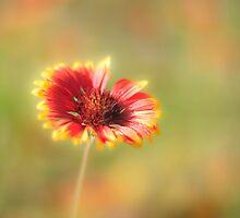Summer Heat by Cindy Green