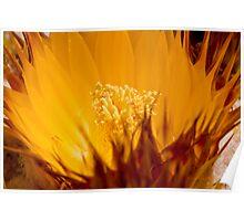 Golden Barrel Blossom Poster