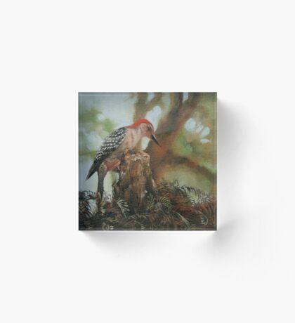 Red Bellied Woodpecker Acrylic Block