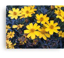 Vibrant Yellow Coreopsis Citrine Flowers Canvas Print