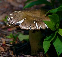 The Forest Floor by patti4glory