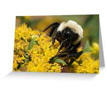 Beauty of the Bee Greeting Card