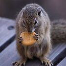 THE TREE SQUIRREL by Magriet Meintjes