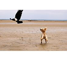 """NO 2 -  """"SPIKKELS"""" AND THE CROW.... 10.41.45 HRS Photographic Print"""