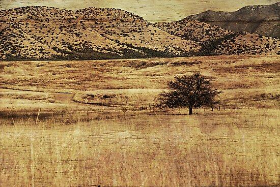 Desolate by Barbara Manis