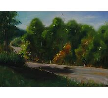 Tree Lined Country Road Photographic Print
