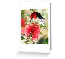 Myzomela sanguinolenta - Scarlet Honeyeater.jpg Greeting Card