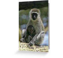 Vervet monkey & baby Greeting Card