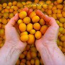 Cumquat Day by Ellavon
