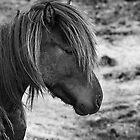 The Icelandic horse by DoraBirgis