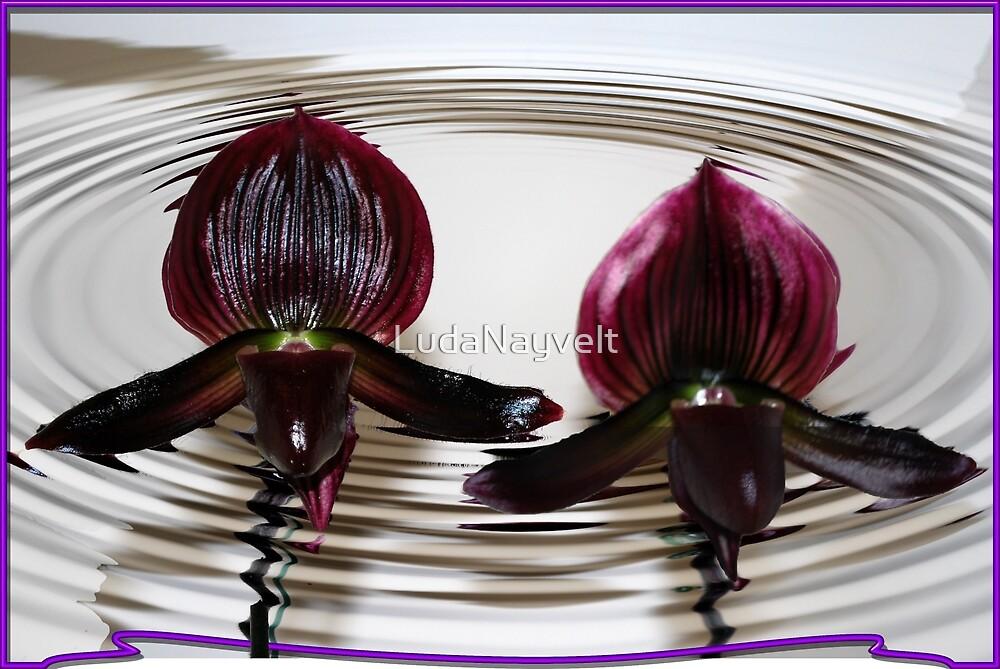 Orchids by LudaNayvelt