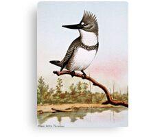 Belted Kingfisher Illustration Canvas Print