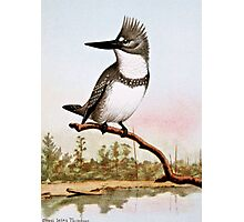 Belted Kingfisher Illustration Photographic Print
