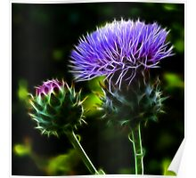 Glowing Thistles Poster