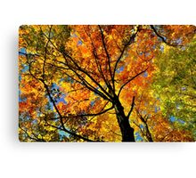 Fall Gamma  Canvas Print