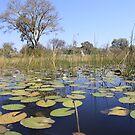 Okavenga Delta - Botswana by Steve Bullock