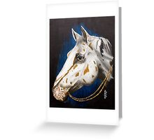 Precious Appaloosa Greeting Card