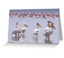 pelican pioneers Greeting Card