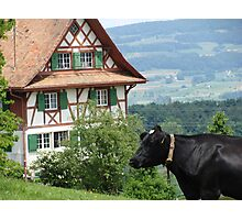 Siwss Cow and Chalet Photographic Print