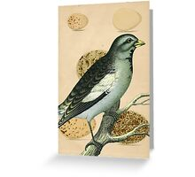 Vintage Bird and Eggs Greeting Card