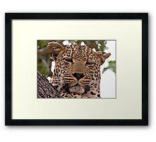 Tumbela, Male Leopard Framed Print