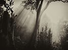 """Serene Sunbeams"" by debsphotos"