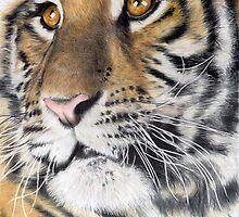 amber eyes by Samantha Norbury