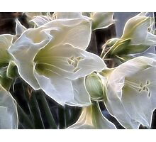 Fractalius lillies.... Photographic Print