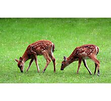 Twin Fawns Grazing Photographic Print