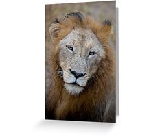 Manyaleti Male Lion Greeting Card