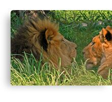 ZOO DENIZENS - AN EXPERIMENT - SEVERAL PHOTOS Canvas Print
