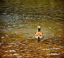 Swimming Shiba by Roberta Parsons