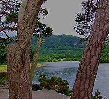Derwentwater through the trees by Tom Gomez
