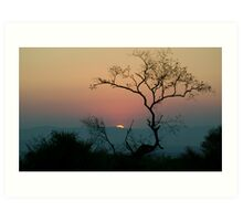 Tree Watching The Perfect Sunset Art Print