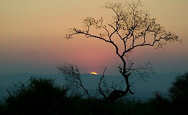 Tree Watching The Perfect Sunset by Michael  Moss