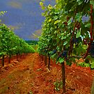 Oregon Vineyard by Jeff Burgess