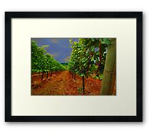 Oregon Vineyard Framed Print