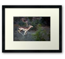 Impala On The Run Framed Print